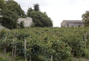 jardin_des_doms_vines